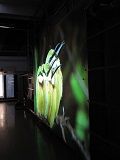 The good side of the dark side: Optical projection screens challenge the norm