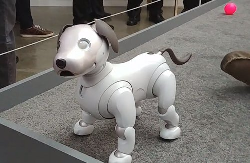 Sony's new Aibo is the cutest tech you'll see this year