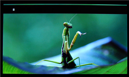 That praying mantis is in Full HD in case you're wondering