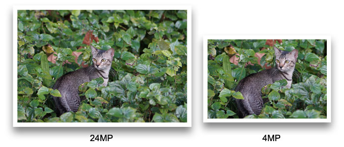 Because the original image on the left was captured at a high resolution of 24MP, we can comfortably crop into the image and get a 'zoomed' photo at 4MP without any quality lost. This is how the 808 PureView 'zooms' into an image.