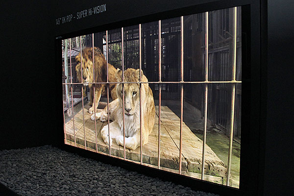 The 145-inch 8K Super Hi-Vision PDP is so huge and high-res that we felt like we were looking at real lions.