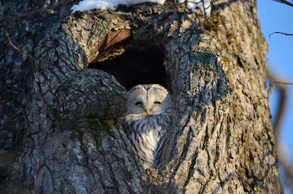 A sample image from Nikon shot by the 800mm lens. Click to see the full-resolution image.