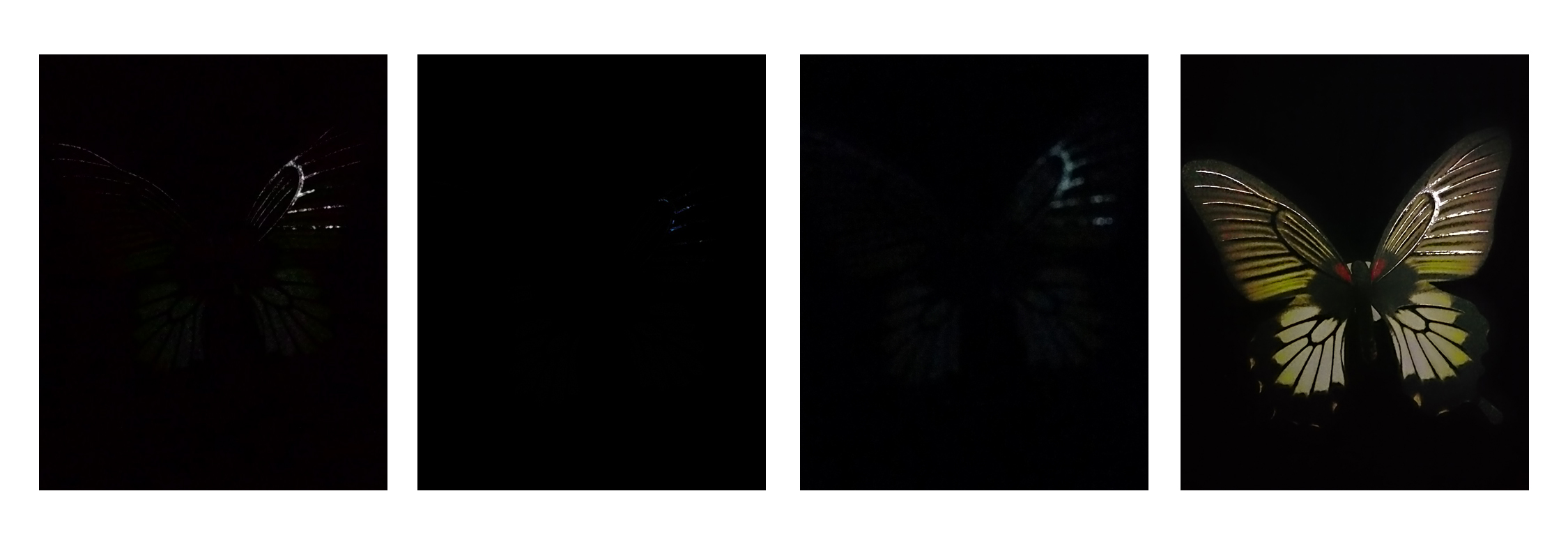 Photos taken in Auto mode.<br>Left to right: ASUS ZenFone 5, HTC One (M8), Samsung Galaxy S5 and Sony Xperia Z2.