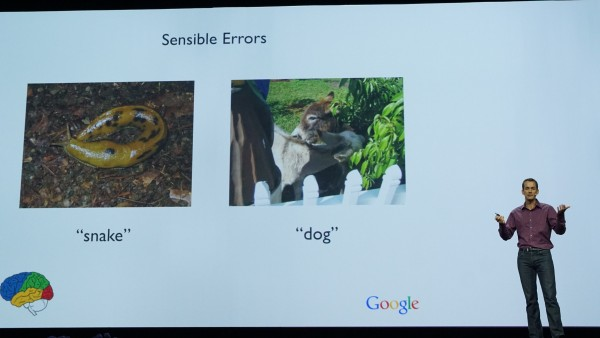 Okay, so even Google's Deep Learning AI still needs to learn between a snake and slug, and a dog and donkey.