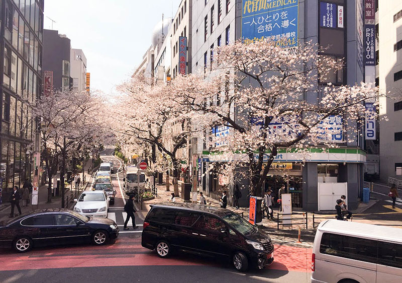 You don't have to head out to parks to see cherry blossom trees. Many streets within Tokyo are lined with them. This was shot in Shibuya.