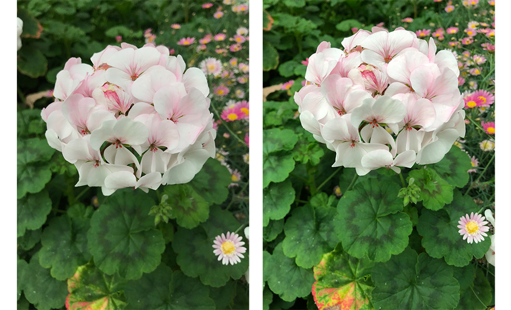 The iPhones 8 are noticeably better at metering, while the iPhone 7 Plus shot (left) is a tad too dark, the iPhone 8 Plus shot (right) is just perfect.