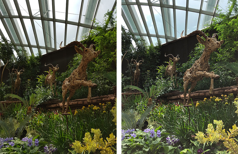 A Samsung Note8 HDR image (left) compared with an Apple iPhone X HDR image (right). The iPhone X HDR photo has more highlight and shadow detail.
