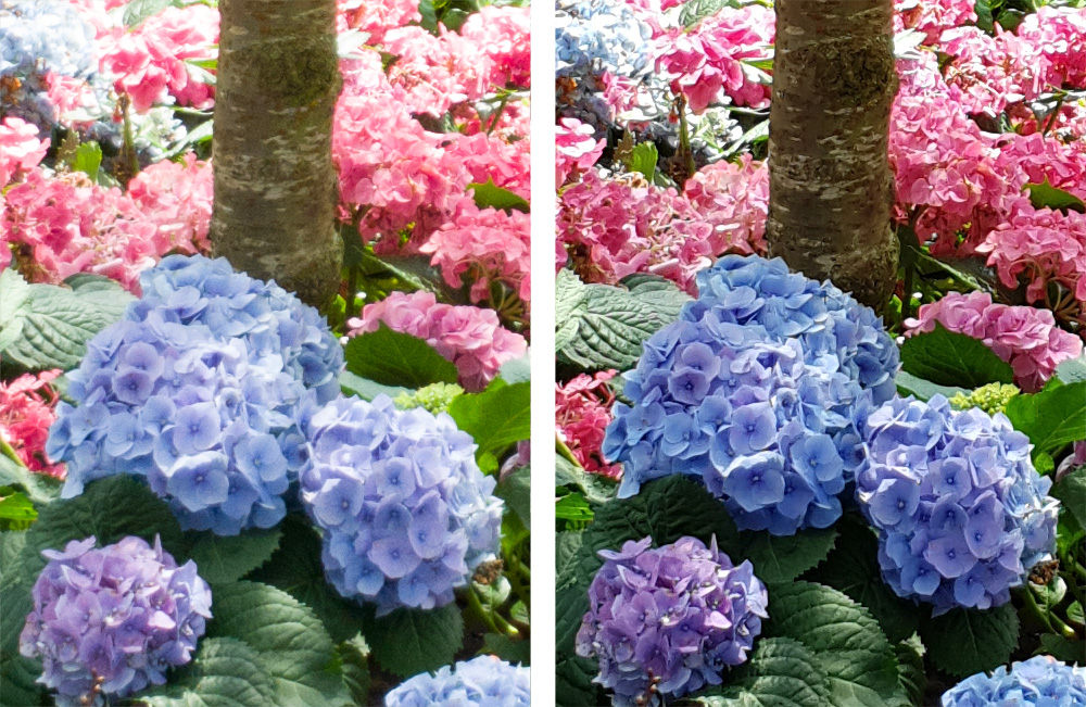 Raw (left) versus JPEG (right). The raw files are softer and noisier, which points to strong sharpening and noise reduction in the JPEGs.