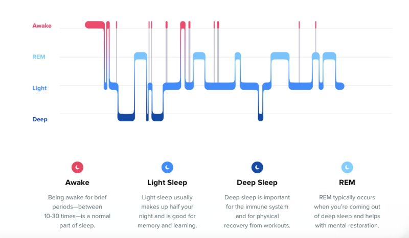 The different sleep cycles. <br>Image source: Fitbit
