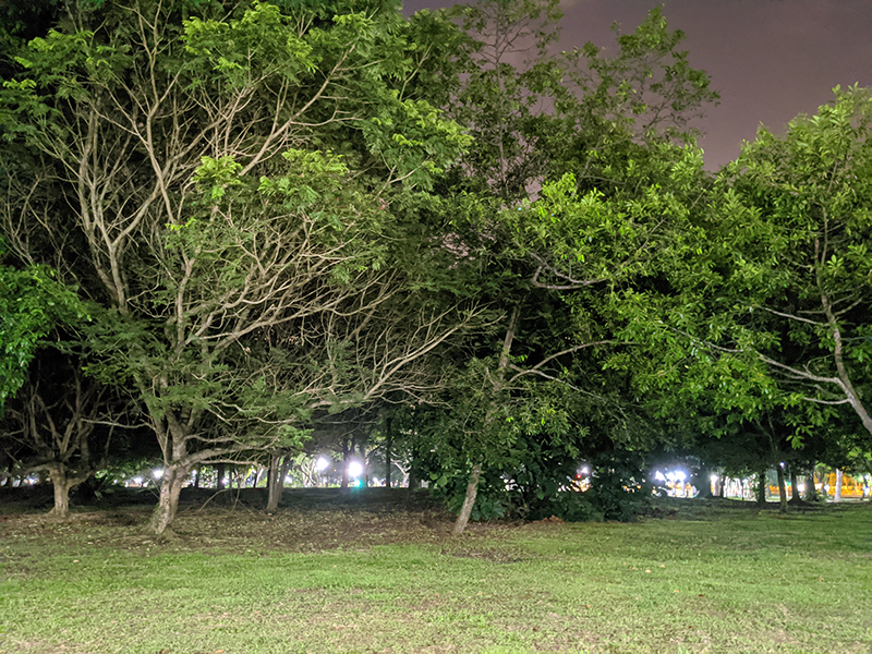 Pixel 4 XL Night Sight on. (Click to view full-size image)