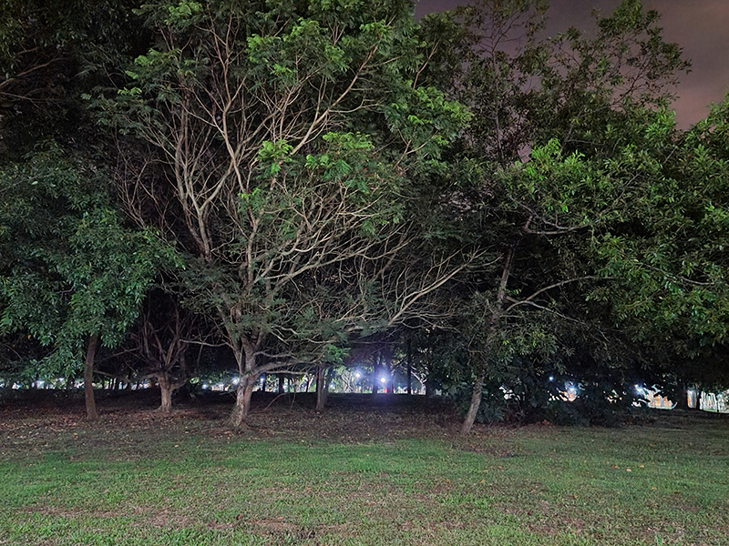 S20 Ultra Night mode on. (Click to view full-size image)