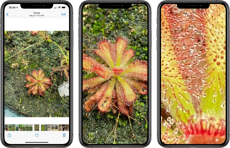 From left to right: Original photo, max zoom on iOS 13, and max zoom on iOS 14. <br>Image source: MacRumours
